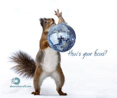 Sometimes you get distracted, like REALLY distracted...3 tips for when you feel like a squirrel caught holding a disco ball! (how could you NOT look, right?!) Disco Ball, Prioritize, Squirrel, Finding Yourself, How Are You Feeling, Things To Come, Tips, Squirrels, Mirror Ball