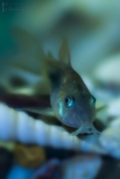 Aqarium Fish
