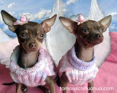 Sookie and Belle...twin angels