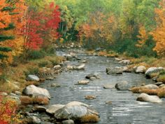 nature streams and trees pocket pc wallpapers