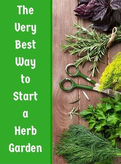 How to Grow Your Own Herbs for Cooking - something to keep in mind as your planning for next year's garden!
