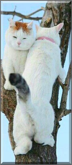 TWO CLIMBER CATS #photo by Moar Shironeko