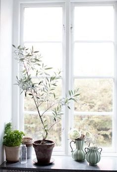 rustic put with the olive tree, tones in the vases and tree, beautiful light… Window Sill Decor, Windows Decor, Portland House, Pot Plante, Flat Ideas, Bedroom Windows, Window Styles, Beautiful Lights, Home Decor Kitchen