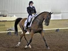 Ever been to the Mid Ohio Dressage Horse Show?  At Roberts Arena...