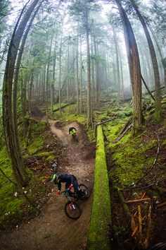 trail biking is one of my favorite ways of admiring the environment. Trail blazing my own bike trail is definitely on my bucket list.