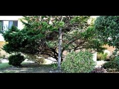 CREATION-VIEW: 460 IMAGE SLIDESHOW VIDEO HD 1080p - PRAISE & WORSHIP HYMNS