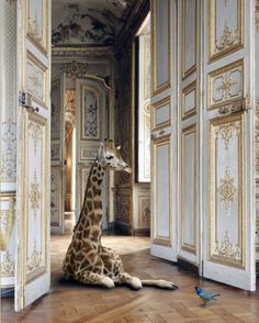 """""""Fables"""" exhibition by Karen Knorr in collaboration with Deyrolle. Animals from the famous taxidermy collection were placed throughout the palaces of France and the result is magical. UPDATE: Many of the animals, including the giraffe, are alive! Beautiful Creatures, Animals Beautiful, Cute Animals, Wild Animals, Jungle Animals, Beautiful Wall, Baby Animals, Monkey Room, Mundo Animal"""