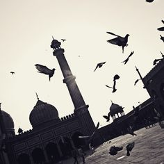 Jama Masjid  #pigeons #photographie #pigeon #streetphotography #jamamasjid  #india #street_photograph #photographie #photographer #canonindia #canon #canon_official #canon50d #featureforcanon #canon_india #retro #photo_storee #photooftheday #sunshine  #summers #delhidiaries  #delhi6 #delhi6streets #evening #flight  #minaret #minar #inspiredtraveller #_soi