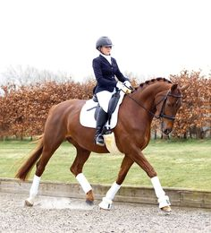 Dazzle the judges with your stylish appearance in the dressage arena #caldene