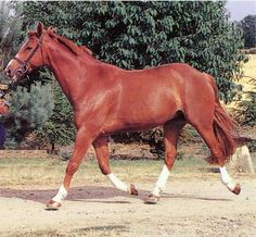 I love a horse the color of a shiny penny...what a pretty Chestnut!
