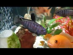 YouTube Underwater, Aquarium, Samsung, Pets, Awesome, Youtube, Animals, Fish Stand, Animals And Pets