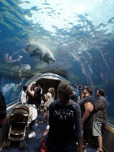 Pittsburgh Zoo & PPG Aquarium: This Underwater Tunnel In Pennsylvania Will Enchant You In The Best Way Possible Us Travel Destinations, Family Vacation Destinations, Places To Travel, Places To See, Family Vacations, Italy Vacation, Vacation Spots, Vacation Ideas, Amigurumi
