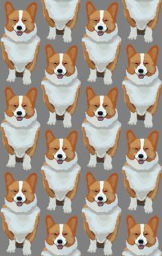 Corgi wallpaper! #corgi