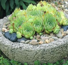 DIY Stone Planting Pot