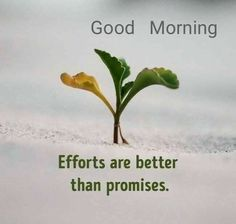 Good Morning Wishes Quotes, Good Morning Images Hd, Appreciate Life Quotes, Good Morning Inspiration, Good Morning Wallpaper, Good Morning Flowers, Scripture Quotes, Good Thoughts, Herbs