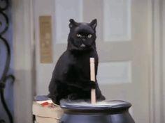 The Chilling Adventures of Salem, Sabrina the Teenage Witch's Cat Salem Sabrina, Sabrina Cat, Happy Halloween Gif, Halloween Cat, Halloween Costumes, Mundo Gif, Salem Cat, Salem Saberhagen, Gato Animal