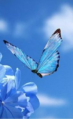 Beautiful Butterflies are one of a lot of varied as well as attractive insects worldwide. Butterfly Kisses, Butterfly Flowers, Blue Butterfly, Beautiful Butterflies, Blue Aesthetic, Beautiful Creatures, Shades Of Blue, Picture Photo, Beautiful Pictures