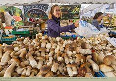 Schwammerlstand mit Steinpilzen am Viktualienmarkt, München, Oberbayern, Bayern, Deutschland