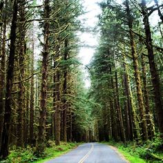#OlympicNationalPark 2011. Can't wait to head back this summer. #Washington #Seattle #Forest #Trees #Nature #Padgram