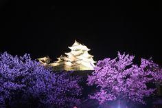姫路城 夜桜会