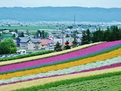 Breathe in the scent of the fresh, colorful flowers at Farm Tomita in Furano, Japan.