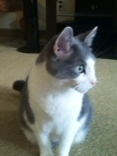 Calliope cat is the cutest if you think so post awwwwww so cute if u don't think she's cute post sorry I don't like her