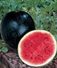 Watermelon - Sugar Baby - Heirloom - The Sweetest - 20 Seeds Sugar Baby Watermelon, Watermelon Smoothies, Baby Fruit, Sweet Watermelon, Organic Vegetables, Fruits And Vegetables, Watermelon Varieties, Fruit Seeds, Fruit Plants