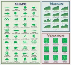 Leaf Chart          Native plants for a Cape Cod garden Musing on nature while ignoring an overcrowded world      Feeds: Posts Comments