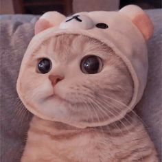 Cute Baby Cats, Cute Cats And Dogs, Baby Dogs, Kittens Cutest, Cats And Kittens, Cute Kawaii Animals, Cute Little Animals, Cute Funny Animals, Funny Cat Wallpaper