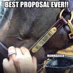 Proposing AND a new leather halter? Really, how do men this great even exist. Love incorporating animals into the proposal! Will you marry me Southern proposal Country proposal My Horse, Horse Girl, Horse Love, Horse Tack, Best Proposal Ever, Perfect Proposal, Equestrian Quotes, Equestrian Girls, Equestrian Problems
