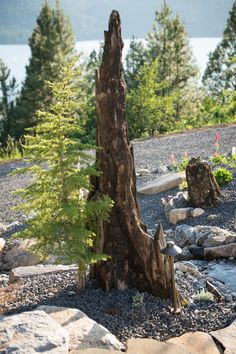 The landscaping features burnt logs from a 1910 forest fire in the area. Makes an interesting conversation piece!