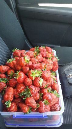 Berry world timboon