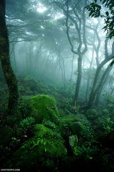 Mystical Forest photography dark nature green forest foggy mystical