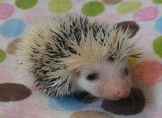 a curious little guy !!!