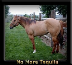 No More Tequila
