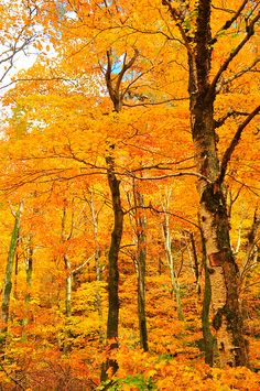 Fall in Vermont (Submitted and taken by paintbypixels, thank...