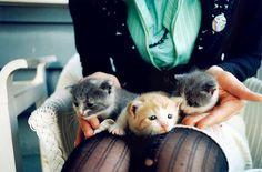 KITTYS KITTYS KITTYS !!!!!