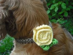 Floral Dog Collar Accessory Pale Yellow & Green by k9knitknots #dogknits