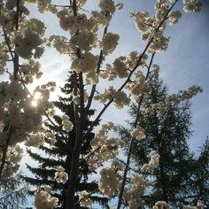 Springtime in Edmonton.