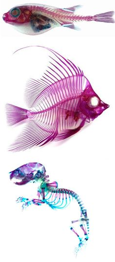 Transparent animals with colored skeletons