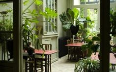 tropical plants inside. love