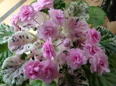 African Violet Rose Bouquet | eBay
