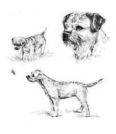 Border Terrier - 1963 Vintage Dog Print - Matted