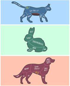 animal petting charts