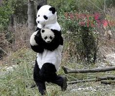 LOL..Did u know panda handlers will put on panda suits so the babies don't feel threatened?? just what i heard :)