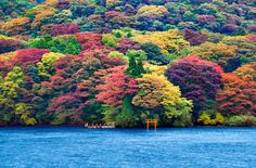 """Foto del día: Los colores de la naturaleza en el Lago Ashi El lago Ashi (芦ノ湖), también conocido como """"Hakone Lake"""", es un lago ubicado en la prefectura de Kanagawa en Honshū, Japón. El pequeño cráter es conocido por sus balnearios y vistas al monte Fuji, además, la zona esta enlazada con la capital (Tokio) mediante la línea de tren Tōkaidō Shinkansen."""