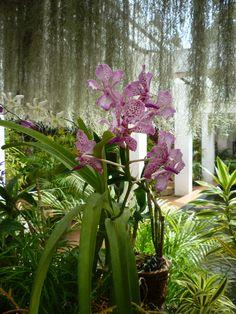 Royal Botanical Gardens - Kandy  Sri Lanka