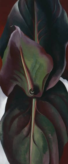 Canna Leaves 1925  Georgia O'Keefe