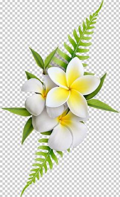 White Flower Png, White Flowers, Photography Editing Apps, Photo Editing, Free Green Screen, Indian Wedding Invitation Cards, Cool Pictures Of Nature, Banner Background Images, Tree Illustration