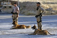 Iraqi Police train working dogs in explosives and narcotics detection by The U.S. Army, via Flickr